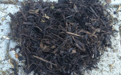 Biofiltri e codici CER: lo smaltimento dei materiali filtranti esausti